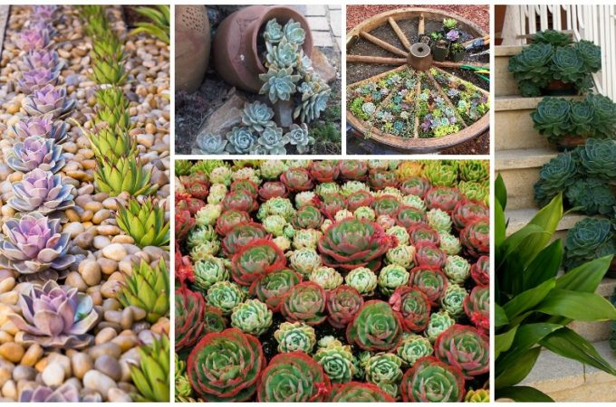 How To Grow Succulents Outdoors Victoria S Glamour